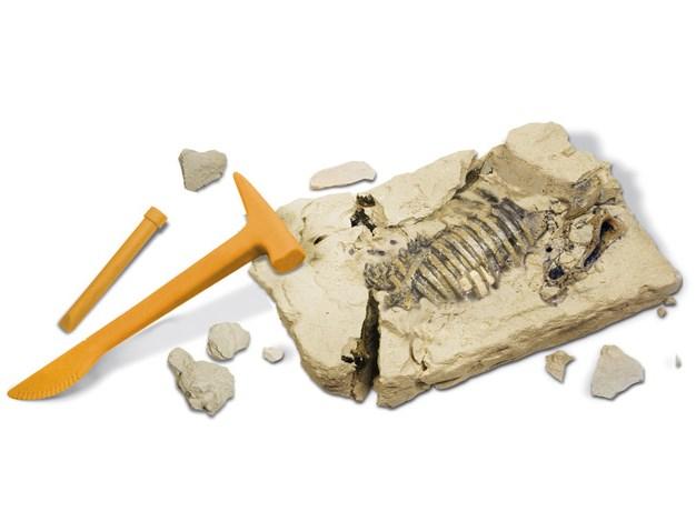 恐竜発掘セット  トリケラトプス  CL-122K